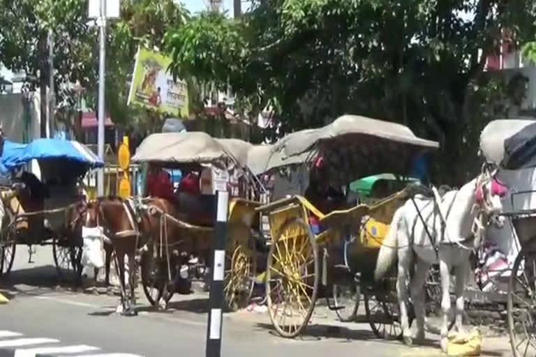 कोरोना काल में घोड़ा और चालक दोनों दानापानी के मोहताज