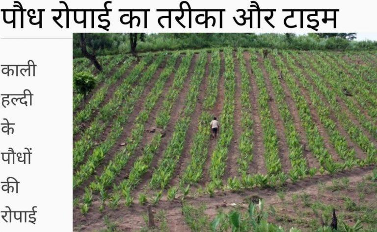 उत्तराखंड में किसानों की आय बढ़ाने के लिए काली हल्दी की खेती को बढ़ावा दिया जाय-जीतमणि पैन्यूली